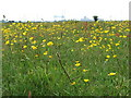 NZ5025 : Wildflowers at Greatham Creek by Christine Westerback