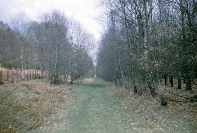 Disused Railway in the Forest of Dean