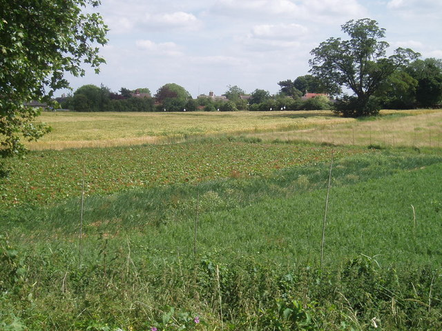 Local crops in Roxton