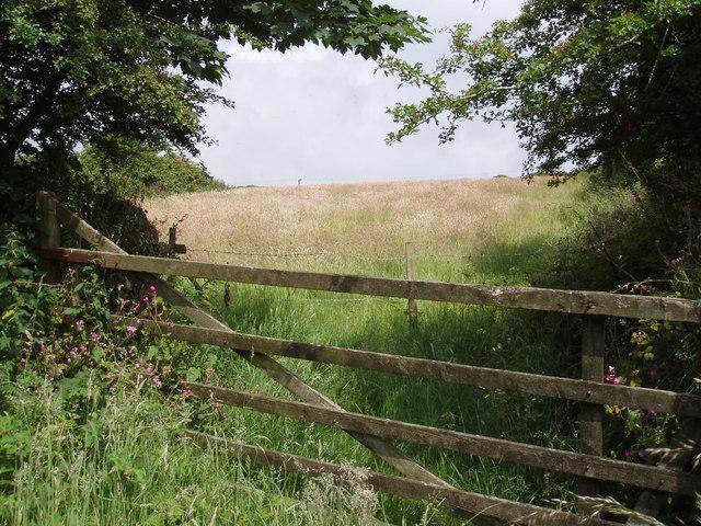 Meadow near Manhay