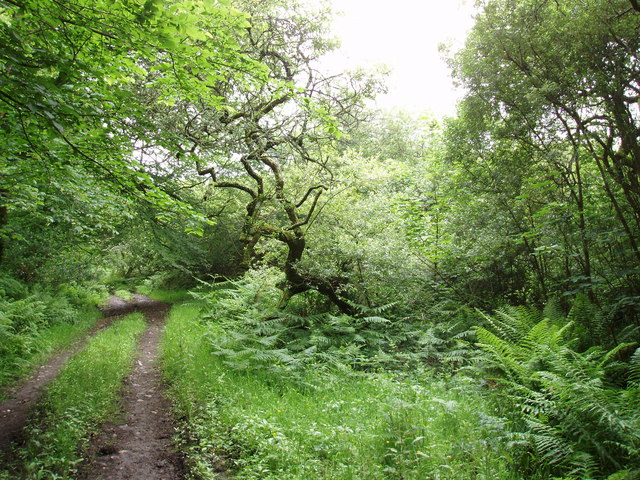 Woodland near Boderlogan
