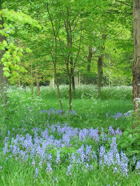 Woodland, West Wycombe Park