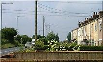 NZ5619 : Fronts of Terrace, Crow Lane, Lackenby by Mick Garratt