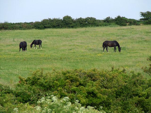 Horses grazing on the hillside