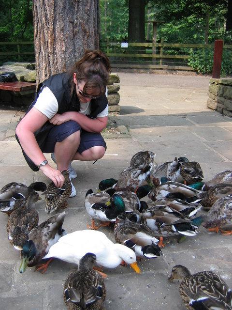Feeding the Ducks at Fairholmes