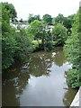 SX4372 : River Tamar from New Bridge, Gunnislake by Penny Mayes