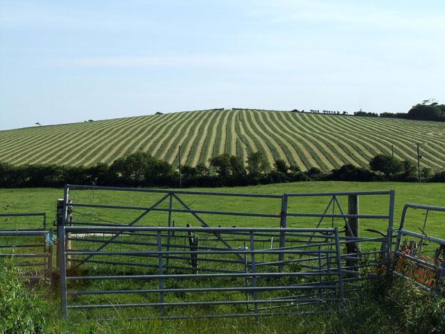 Stripes in a field