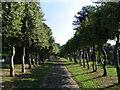 SJ3284 : Trees in Cemetery, Bebington by Peter Craine