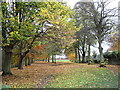 NY9265 : Tyne Green Country Park in Autumn by Clive Nicholson