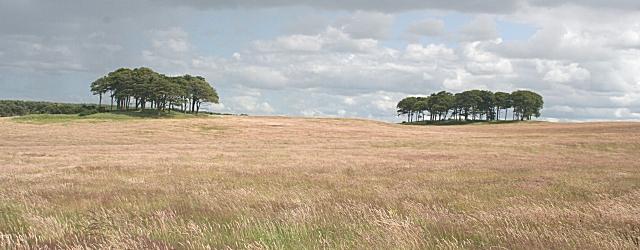 Field at Maverston