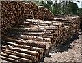 NJ3162 : Logs by Anne Burgess