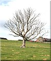 NJ3163 : Dead Tree by Anne Burgess