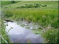 SJ1465 : Bog on Moel Llys y Coed by Eirian Evans