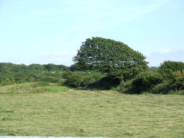 A freshly-cut field