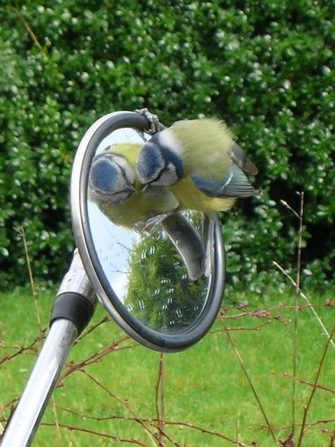Bird on Bike