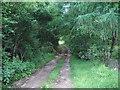 NY6116 : Footpath by Alexander P Kapp