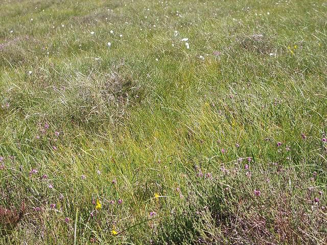 Grassland south of Loch Garry