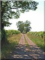 NY2555 : Farm road near Little Bampton by Oliver Dixon