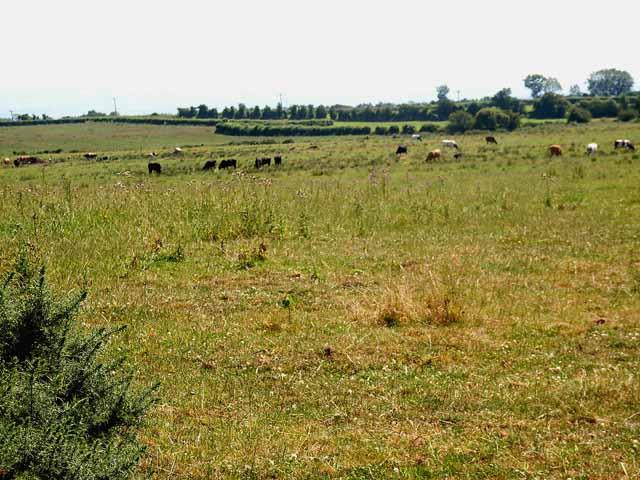 Meadows near Little Bampton