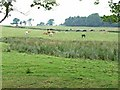 NY5562 : Pasture at Boothby, near Lanercost by Oliver Dixon