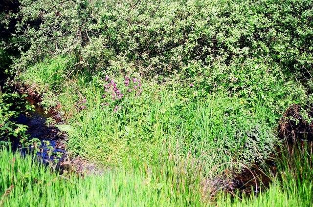 Stream running through part of Tregaron Nature reserve.
