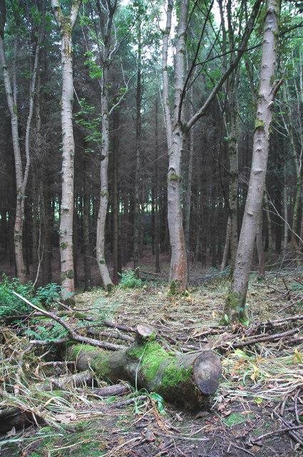 Woodland near mute hill