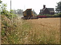 SJ5679 : Combining Wheat, Aston Heath Farm, Aston Lane by Ian Warburton