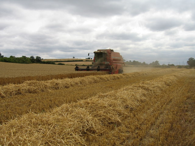 Harvesting wheat near Walton-on-Trent, South Derbyshire.