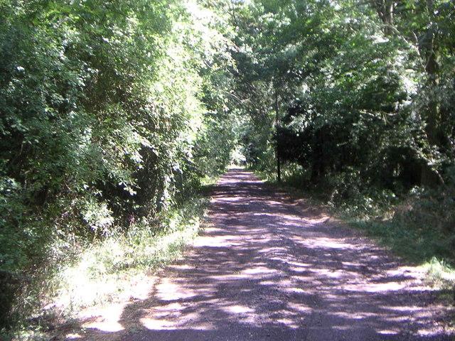 Salden Wood track
