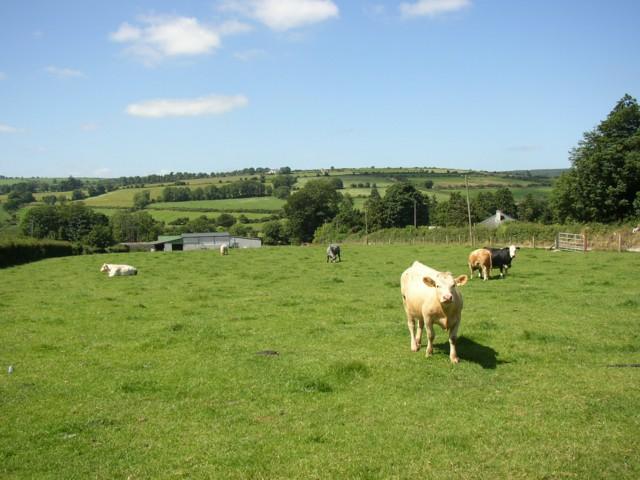 Pasture at Listerlin, Co.Kilkenny