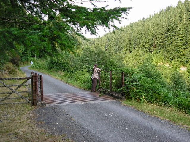 Dyfi Forest