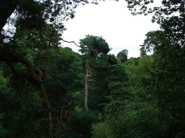 Tree in Roslin Glen