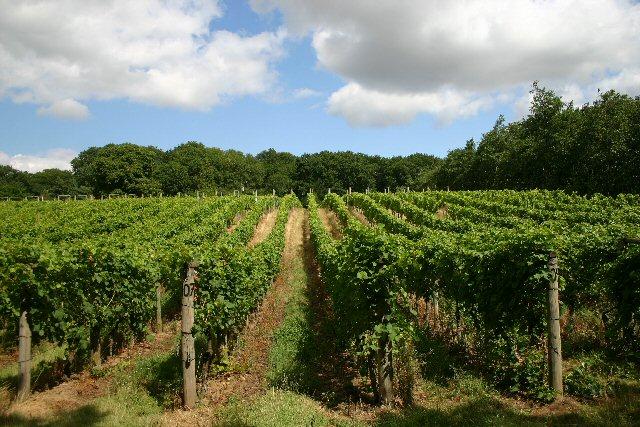 Vineyard at Wyken Hall