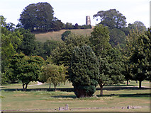 ST5038 : Glastonbury abbey gardens with Chalice Hill beyond by Jim Champion