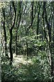 SX1259 : Woodland by Tony Atkin