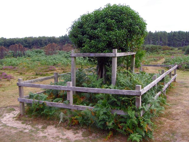Site of the Naked Man, Wilverley Plain, New Forest