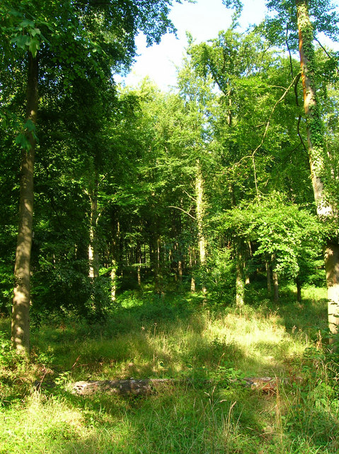 Wildham Wood