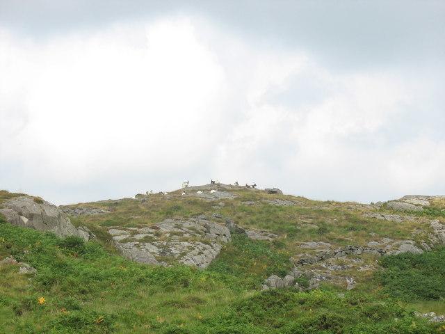 A Nantcol Hillside