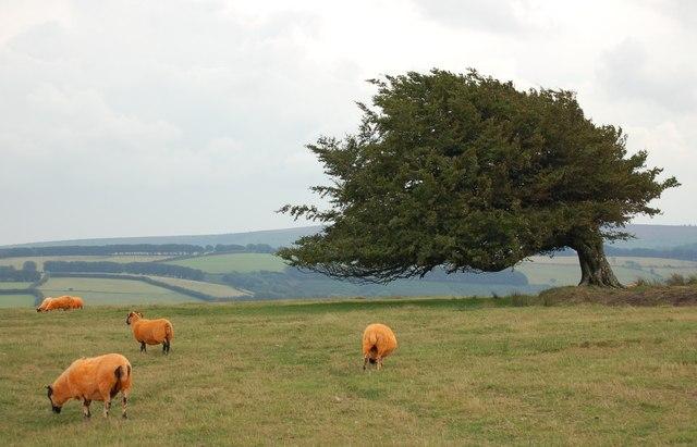 Orange Flavoured Lamb on Stone Down