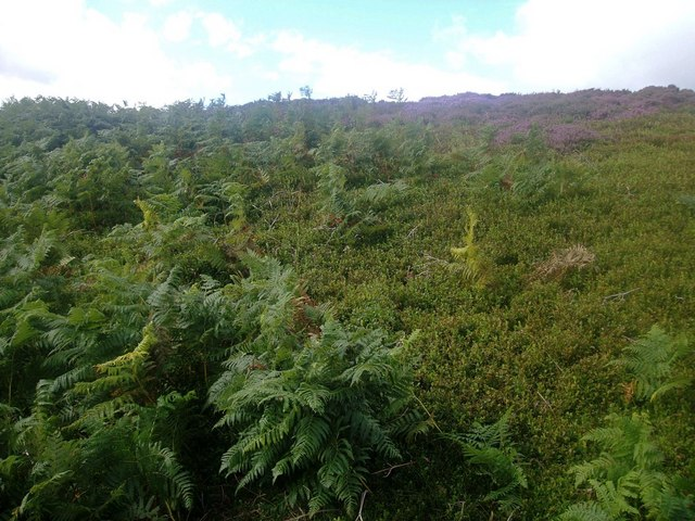 Vegetation boundary