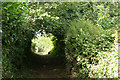 ST2911 : Combe St Nicholas: footpath by Martin Bodman
