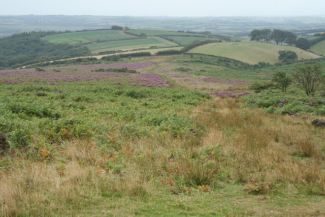 Molland: above Anstey's Combe