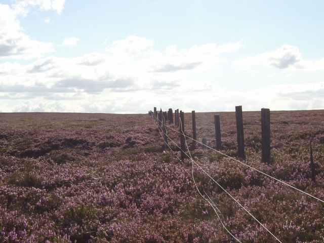 Fences through the heather