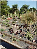 TQ1877 : Cactus  outside in Kew Gardens by David Hawgood