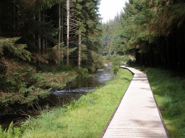 Forest Walk, Hafren Forest