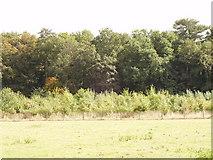 SP8800 : Hobbshill Wood, Great Missenden by David Hawgood