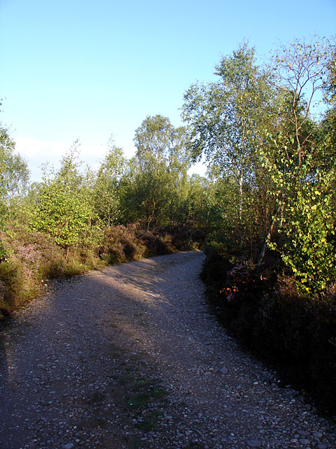 Track leading to a camping field
