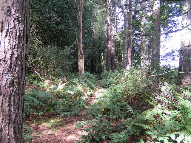 Footpath in Greatgate Wood