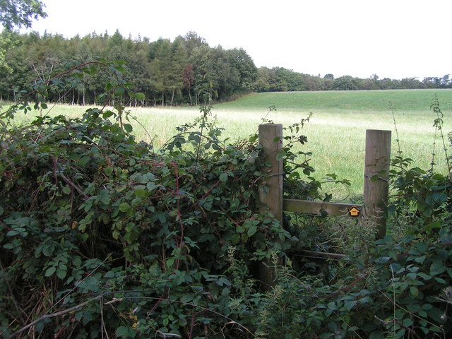 Greatgate Wood from the south