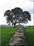 SE0950 : Dry stone wall by Clare Smith